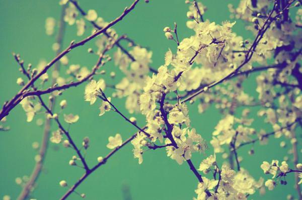 4 крутых места, куда можно поехать весной